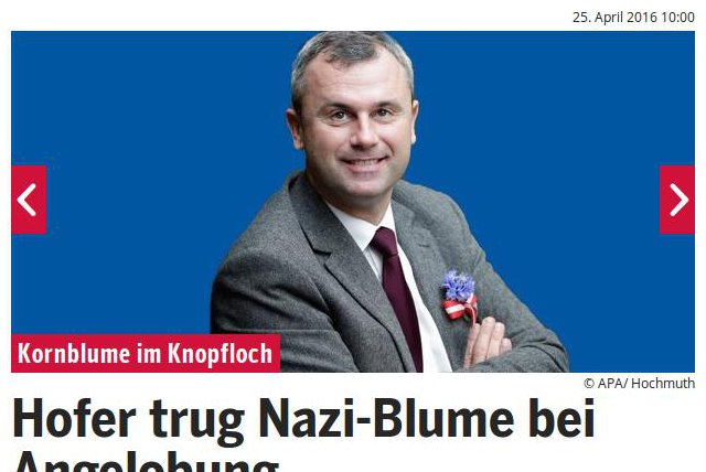 Hofer, Norbert blaue Kornblume